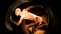 BODY WORLDS – The Cycle of Life back in Rome